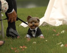 Tips for having your dog in your wedding.....HAHAHA this picture is really cute!