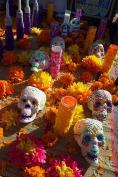 The marigold most commonly used in Dia de los Muertos celebrations is the Targetes erecta, Mexican marigold or Aztec marigold, otherwise known as cempasuchitl or flower of the dead. Mexican marigolds are quite tall, reaching up to 3′.