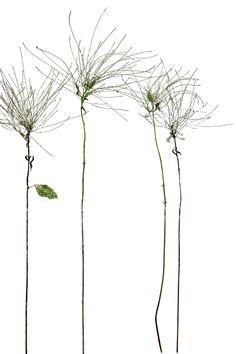 trailside weeds (mary jo hoffman)