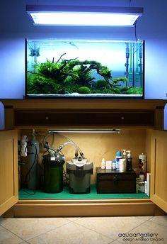 An aquascape setup.