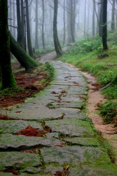forests, stone pathways, tree, stone paths, garden paths, into the woods, magical forest, walkway, the road