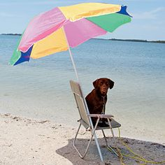 Dog Days of Summer | Keep them in the shade with fresh water...
