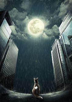 Cat Wishing on the Moon