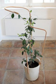 Brilliant idea for all plants that require support!