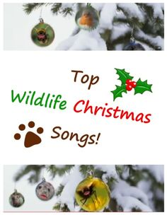 Wildlife animal christmas songs