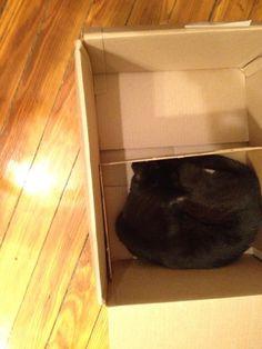 Fresh Direct separates the fragile items. #catinabox freshdirect box