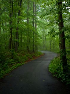 Ozark National Forest | Arkansas