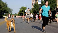 The Dog Days of Summer: 8 Tips to Keep Your #Dog Safe on #Runs | via @FitBottomedGirl #pets #fitness