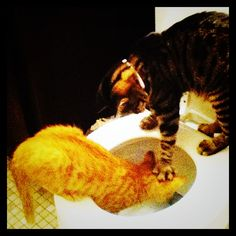 Could see Cagney doing this to another cat. @Katrina Layman @Brenna Rassmann