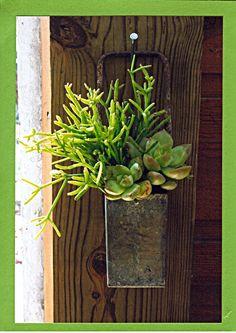 Hang it! Succulents