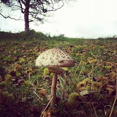 This fungus was spotted at Calke Abbey by Emma Olechniewicz on 19 October
