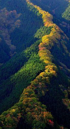Maple top ~Japan