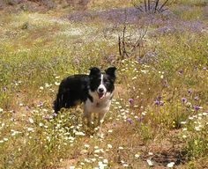 All about Southern California wildflowers! (and the doggie)