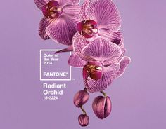 "The COLOR of the YEAR in the GARDEN is ""Radiant Orchid""! Thumbs UP or thumbs DOWN? ✿"