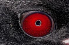 Olhos animais