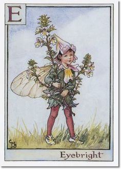 cice mari, mari barker, fantasi, alphabet, flowers, eyebright fairi, flower fairies, cicely mary barker, fairi print
