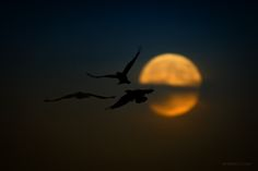 Pac-Moon :) by Fabrizio Lutzoni on 500px Italy