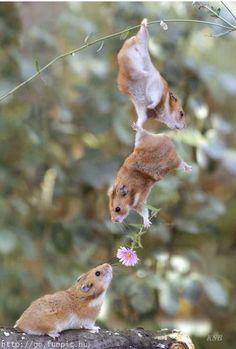 funny animals, teamwork, valentine day, baby animals, hamster