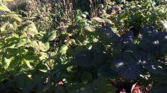 Incredible Growth In My Hybrid Grow Bag Garden! Wow!