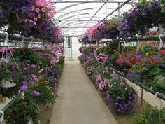 Saunders-Greenhouse: my favorite place to go for gardening