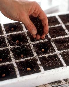 Get an early start to the season by starting seeds indoors.