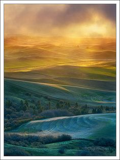 Vertical Golden Light, Palouse by Chip Phillips