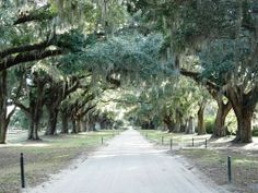 Plantation Life in the 1800s | Charleston, SC-Boone Hall Plantation {Delightful Adventures}