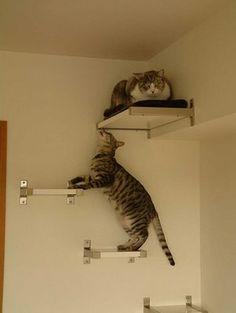 IKEA Hackers Cat Climbing Wall