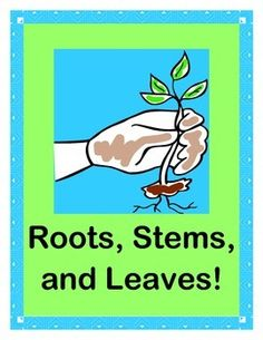 Turn your kids into PLANTS with ROOTS, STEMS, and LEAVES!  Play a GROUP SCIENCE GAME with a 'beat'!  Includes age-appropriate 'TALKING POINTS' about how roots, stems, and leaves work.  Kids will make PLANT CRAFTS cooperatively for MULTI-SENSORY LEARNING!  Sing a funny SONG and do a 'PLANT RAP'-- great photo op!  (9 pages)  From Joyful Noises Express TpT!  $