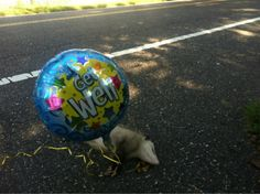 I'm sorry...this made me laugh really hard. Get Well SoonRoadkill.