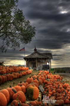 pumpkin patch under a stormy autumn sky....love the pumpkin orange against the blue-grey!