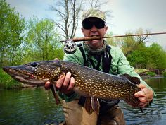 Pike on the fly. - has to be a blast