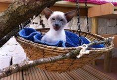 Outdoor Cat Run Furniture