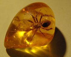 Amber is a stone of cleansing & purification. It symbolizes the Sun's energy and therefore it is suitable for awakening joy, and stimulating light and warm feelings. Amber attracts love and provokes happiness and pleasure.