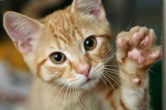Recipes for homemade cat treats. Learn about feeding natural cat treats and organic pet treats