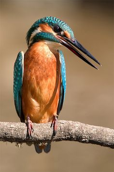 Kingfisher  ♥ ♥   www.paintingyouwithwords.com