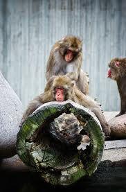 Monkey Massage Skool