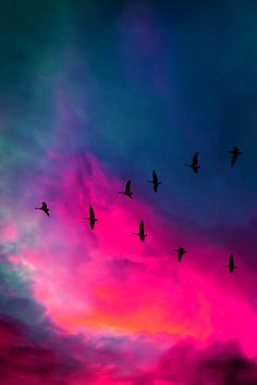 bird, flying geese, sky, sunset, background, cloud, light, watercolor projects, inspiring pictures