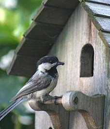 10 ways to attract wildlife to your garden.. help is provide #homesfornature in your garden.