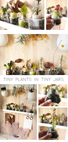 These succulents in old ink jars are so cute!