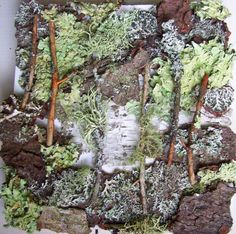 Lichen Wall I  Living Wall Sculptural Nature Collage by perisoreus, $38.00