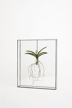 glass frame with hanging air plant