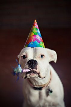 """""""I'm a party of one!"""" #dogs #pets #Boxers Facebook.com/sodoggonefunny"""