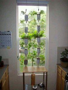 Window garden.