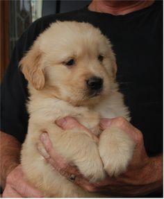 dog, baby puppies