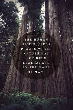 """The human spirit needs places where nature has not been rearranged by the hand of man."" (anon) • Photography/Typography work by Ashley Herrin"