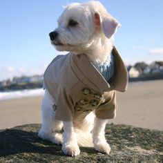 Westerly Trench Coat for dogs!? SO CUTE