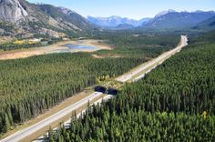 Canada to build a million-dollar highway for potential roadkill to safely cross