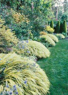 Japanese forestgrass      This low-growing, mounding plant has bright yellow, green-striped leaves, making them perfect for brightening shady spots in gardens. From late summer to midautumn, it bears needlelike, pale green spikelets