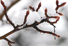 Ready for the meltdown to begin? #spring #trees #TreePhotos
